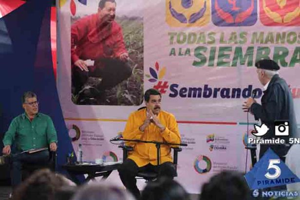 Piramide5N- Maduro miranda 03
